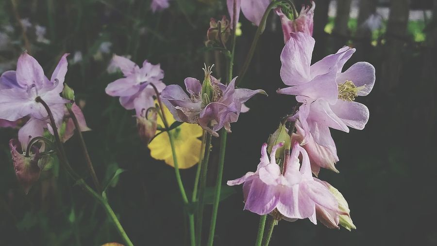 Purple Love Flower Flower Head Butterfly - Insect Insect Purple Summer Close-up Animal Themes Plant Iris - Plant Orchid In Bloom Flowering Plant Lilac Plant Life Blossom