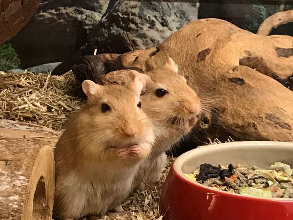 Sweet rodents! Mammal No People Terrarium🍀