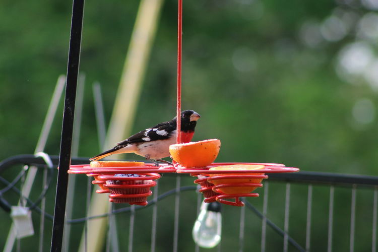 Close-up of bird perching on a feeder