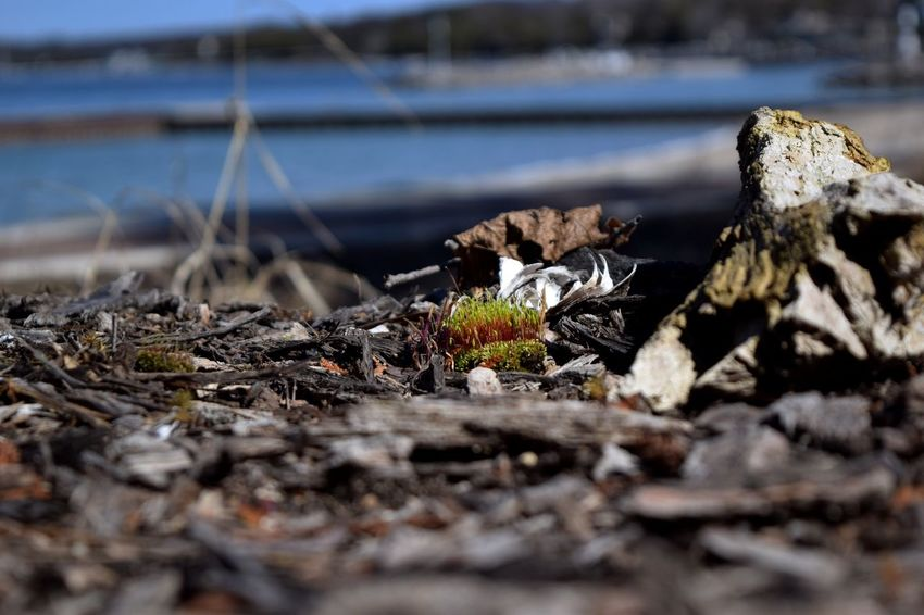 A hint of life Nature Selective Focus No People Day Outdoors Close-up Water Beauty In Nature Fragility Moss Lake Lake View Bokeh Bokeh Photography Green Green Color Growth Springtime Growing EyeEmNewHere