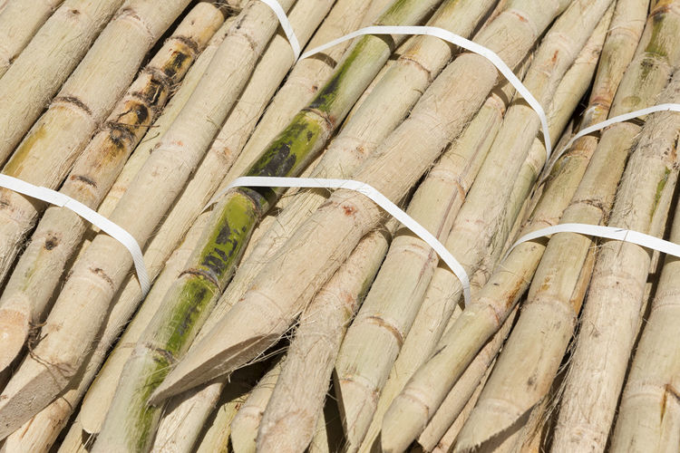 Peeled Sugar Cane Sugar Cane Food And Drink Healthy Eating Freshness Food Still Life Close-up Nature Background Sweet Sugarcane Natural Organic Agriculture Full Frame Backgrounds Plant Peeled Pieces Cut Pattern Bunch Bunches