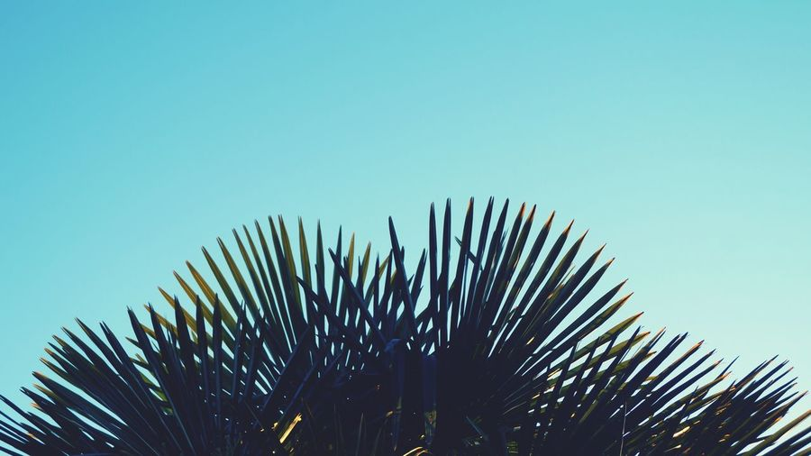 I'm a fan Sky Plant Clear Sky Growth Tree Nature Low Angle View Tranquility Palm Leaf Outdoors Tropical Climate Green Color Scenics - Nature Leaf Palm Tree Blue Day Beauty In Nature No People Copy Space