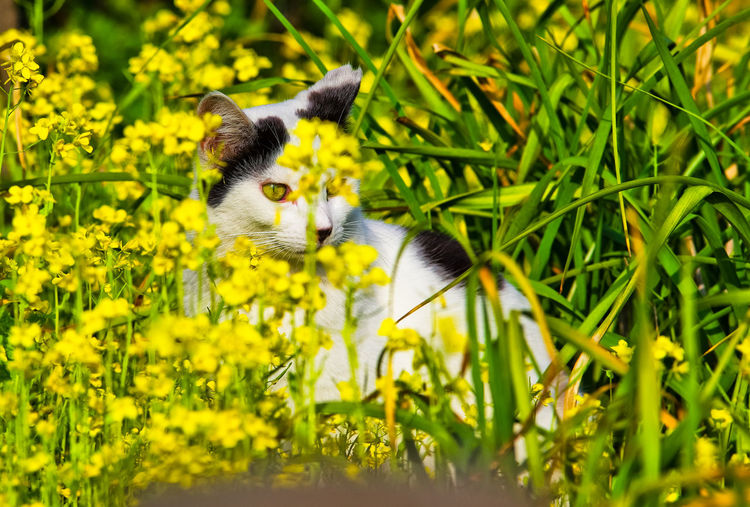a cat in flower garden Animals In The Wild Cat Cat Lovers Flowers Green Color Mammal Nature No People One Animal Outdoors Springtime Wildlife