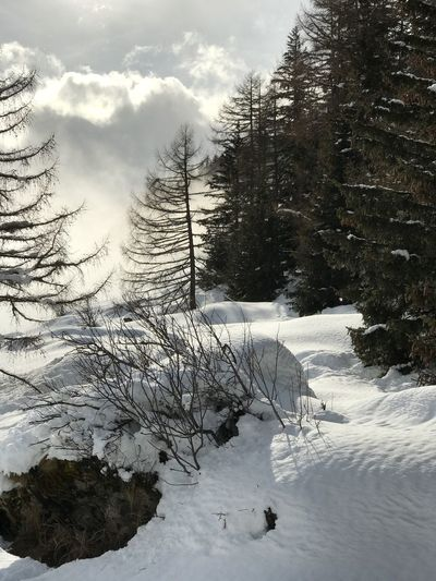 Misty Landscape Foggy Fog Coming In Nature Beauty In Nature Snow Outdoors Weather Scenics Winter Sky Day No People Valais Lötschental