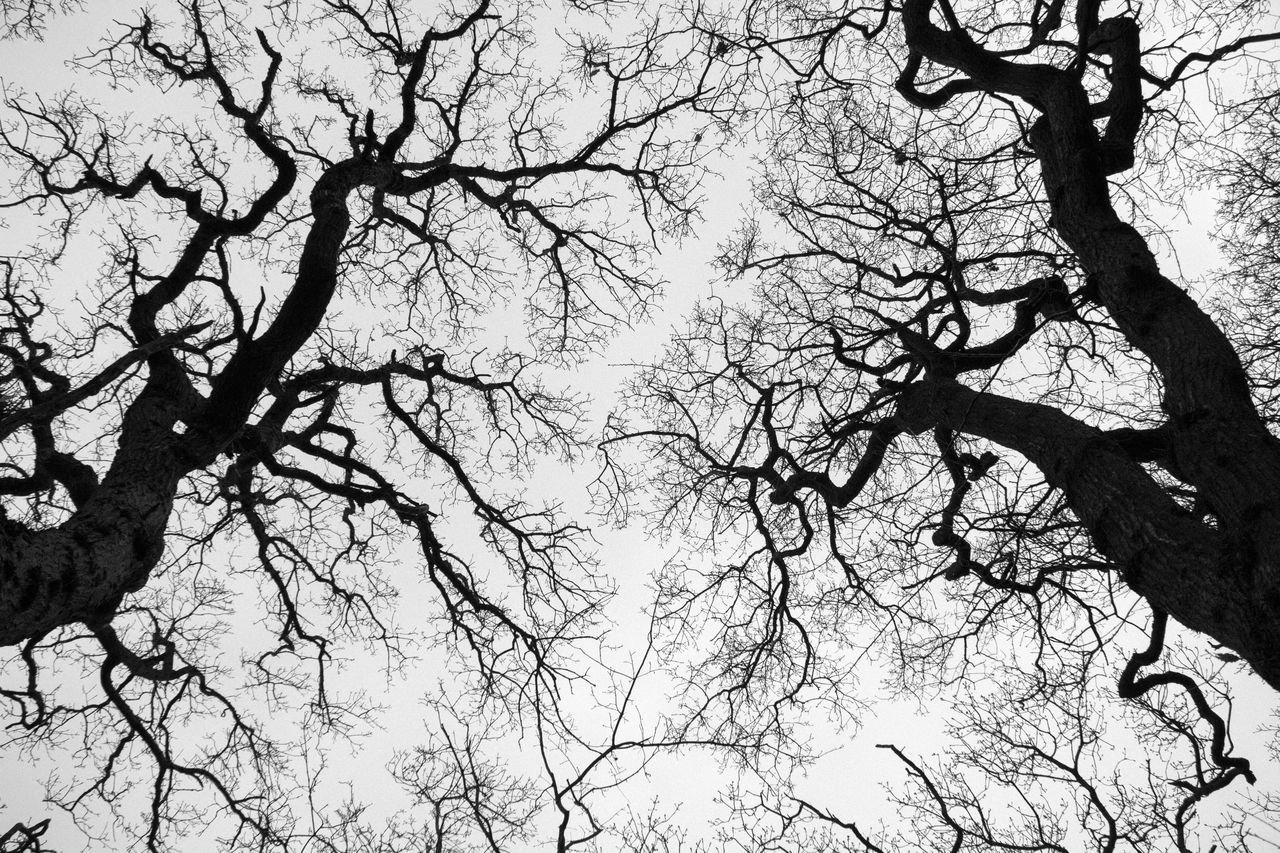 branch, tree, low angle view, bare tree, beauty in nature, nature, no people, tranquility, outdoors, scenics, day, growth, sky
