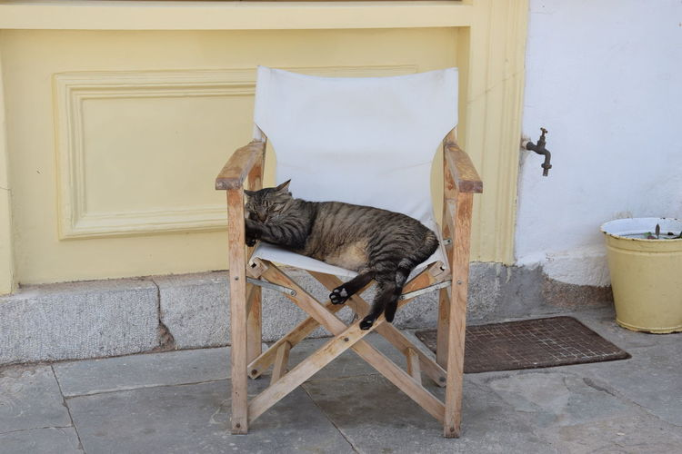 Cat sitting on chair outside building