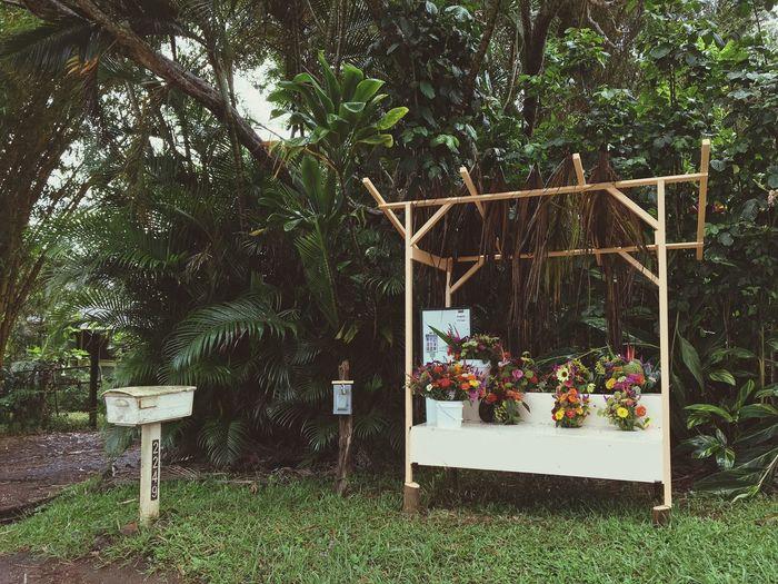 Flower plants in greenhouse