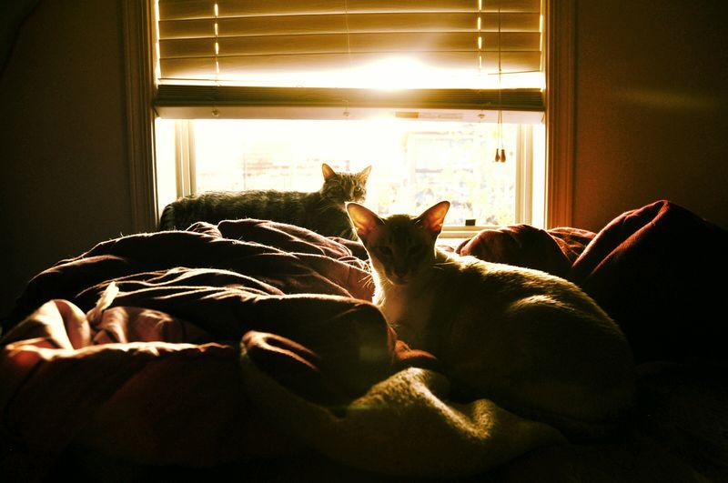 Cats Of EyeEm Cat Lovers Cat♡ Cats Window Cat Cat Window Domestic Animals Domestic Cat Pets Cats 🐱 Cats Lovers