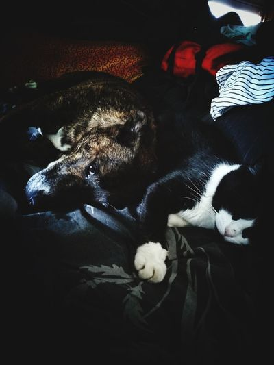 Domestic Animals Hugs & Love  Memories
