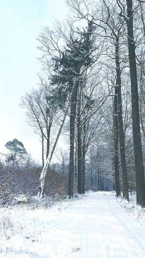 Forest Road Trees Snow Winter Zielony Las Nature Nature Photography Smartphonephotography Nature_collection