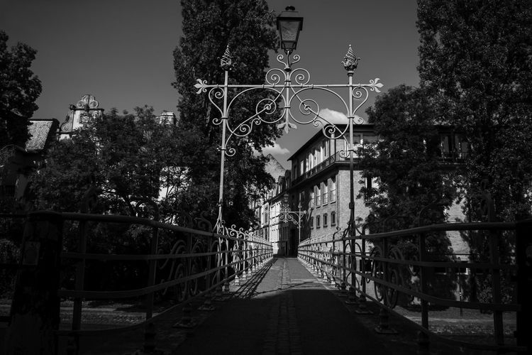 Urban Perspectives Street Photography Black & White Monochrome Black And White Tree Built Structure Plant Direction The Way Forward Architecture Nature Railing No People Bridge Building Exterior Outdoors Sky Day Connection Diminishing Perspective Building Footbridge City Footpath