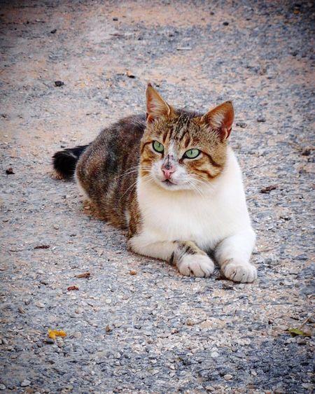 Close-Up Of Cat Sitting On Street