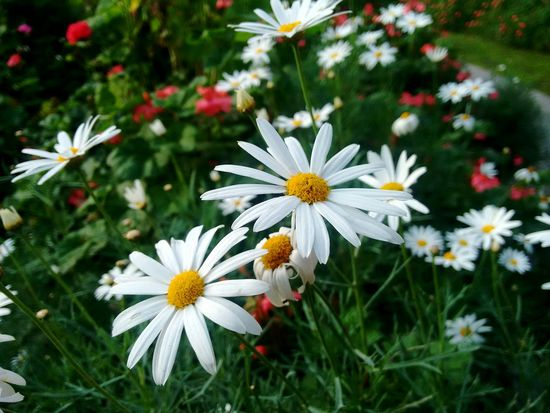 Flower Plant Beauty In Nature Flowers,Plants & Garden Flower Collection Facatativa
