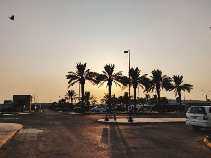 Lazy Sundays Tree City Palm Tree Sunset Silhouette Sky Date Palm Tree