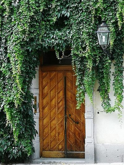 Old-fashioned Historic Historical Building Stockholm Streetphotography Eingewachsen Tree Door Architecture Plant Built Structure Green Color Close-up Entry Entrance Gate Creeper Plant Doorway