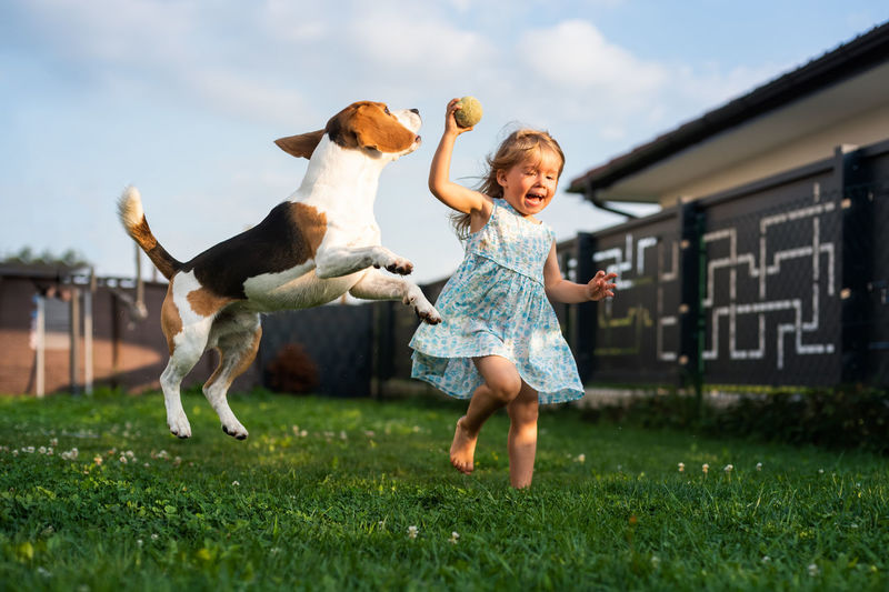 Adorable baby girl runs together with beagle dog in backyard on summer day. domestic animal