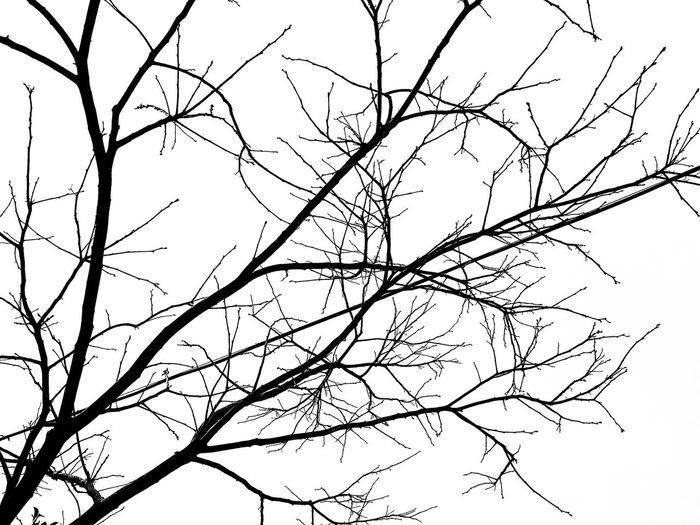 Winter Trees Black & White