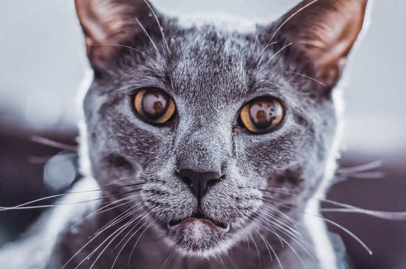 Instalikes Photography Flowers Streetphotography Liketime Hobbyph Phoyooftheday EyeEm Selects Portrait Pets Looking At Camera Close-up Yellow Eyes Maine Coon Cat Cat Stray Animal Tabby Cat Domestic Cat