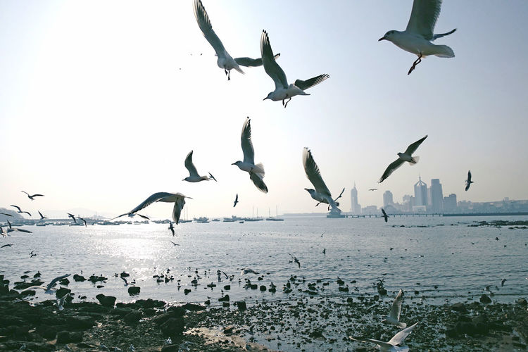 Bird Animals In The Wild Animal Wildlife Animal Themes Group Of Animals Animal Sky Flying Water Sea Beauty In Nature Seagull Nature Flock Of Birds Horizon Over Water Horizon Stone Day No People Scenics - Nature Spread Wings City Cityscape Life Outdoors Analogue Sound