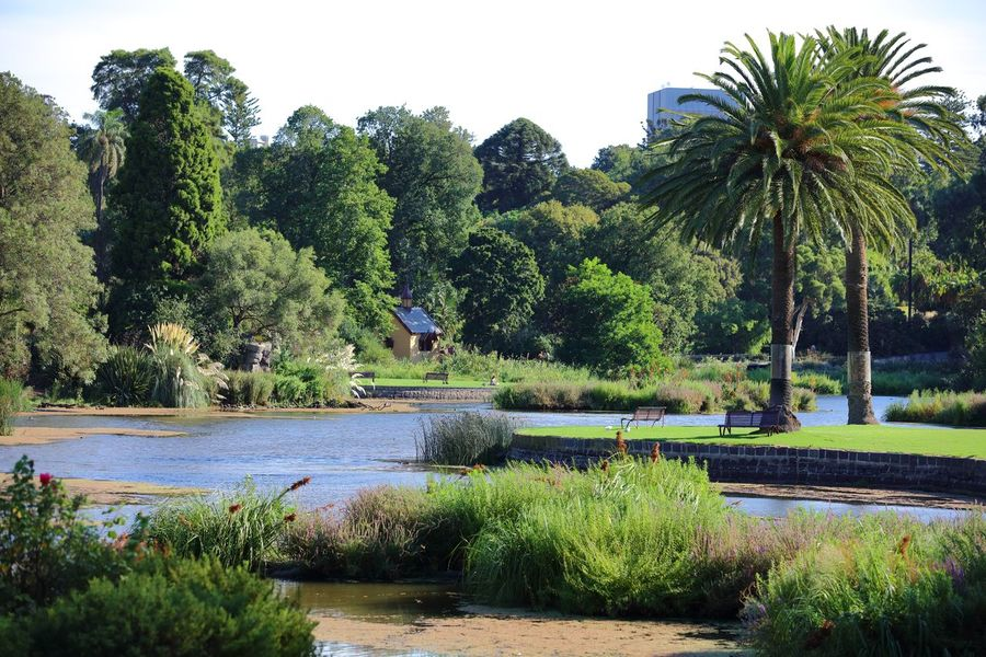 A pulled back perspective of one of the many small lakes situated within the Melbourne Botanical Gardens. The urban skyrise building peering out from the Phoenix Palm trees, gives a perspective of how close this natural sanctuary is from the heart of the Melbourne CBD. A series of different themed gardens are nestled in & around these small lakes, with seated area's to sit, while admiring this natural vista. Beauty In Nature Botanical Gardens Building Depth Of Field EyeEm Gallery EyeEm Nature Lover EyeEmNewHere Green Colour Lake Melbourne City Outdoors Peaceful Rippled Water Sanctuary  Skyrise Building Tadaa Community Tourist Attraction  Tourist Destination Tranquil Scene Tranquility Travel Destinations Travel Photography Trees Urban Landscape Water