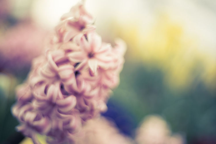 At Some Flower Bed At Some Park Blurred British Flowers London Pink Flower Spring In London あえてピンぼけ 花の名前