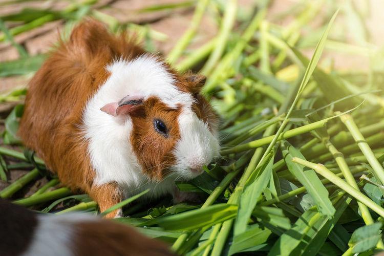 Close-up of rabbit eating grass