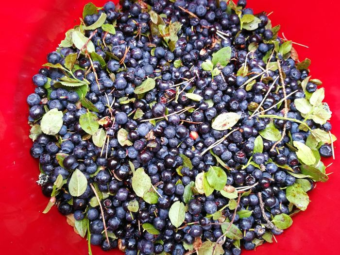 Directly above shot of blueberries with leaves against red container