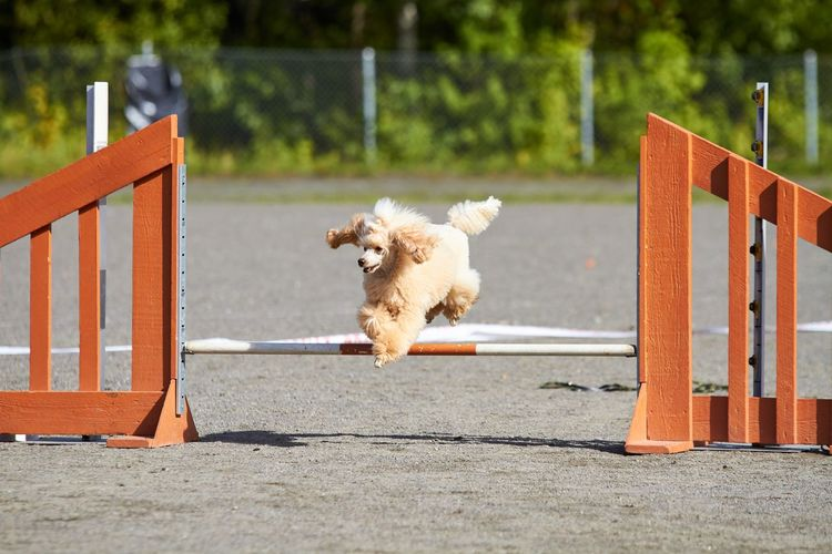 Dog running on seat