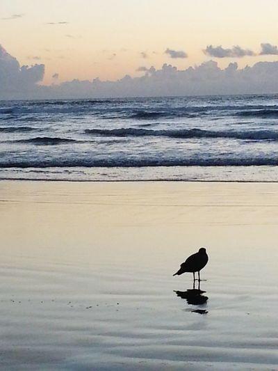 Solitude.... Nye Beach. Oregon Coast. Galaxy S3 & EYEem Editing. My Scenery