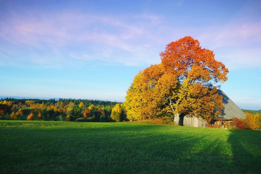 Herbst am Tonishof in Königsfeld im Schwarzwald Tree Nature Beauty In Nature Grass Field Sky Tranquil Scene Landscape No People Tranquility Autumn Autumn Leaves Autumn Colors Beauty In Nature Tonishof Königsfeld Schwarzwald