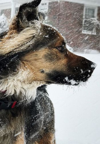 Close-up of wet dog during winter
