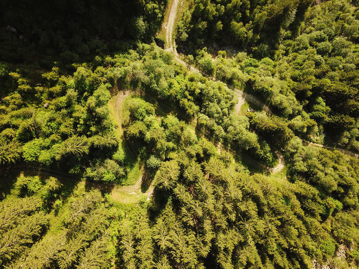High angle view of lush foliage in forest