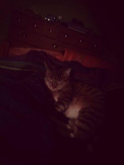 My Cat<333