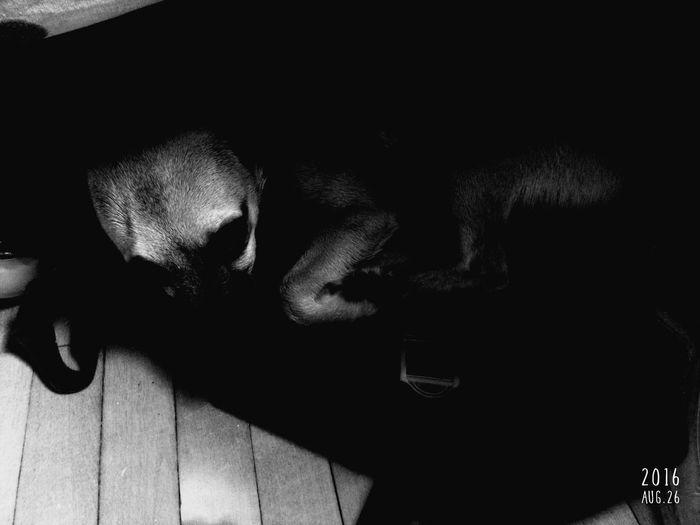 Indoors  Pets Dog One Animal Sleeping No People Bestfriend