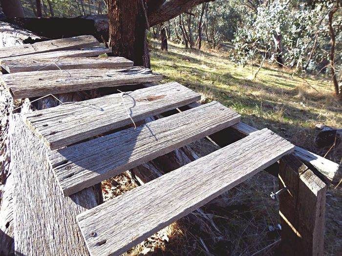 Outdoors Wood - Material Timber Tree Day Log Lumber Industry Tree Trunk No People Tree Stump Stack Sunlight Grass Nature Woodpile