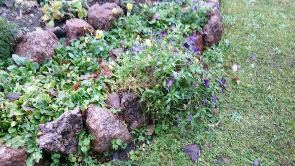 цветочки чудесный ноябрь выборгский район ленобласть