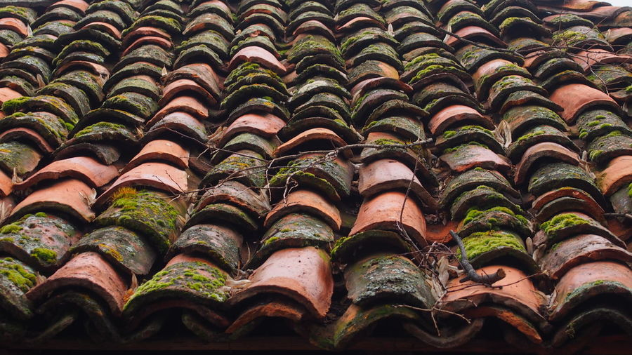 Moss Growing On Tiled Roof