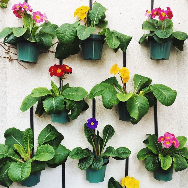 Flowers Flower Flower Collection Flowers,Plants & Garden Greenhouse Greenhouse Plants Colour Color Colorful Colour Of Life