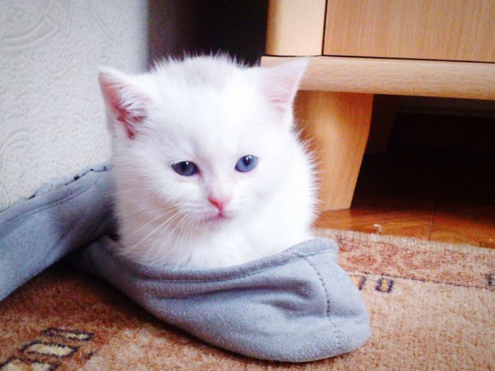 Cat Kitten White Relaxing Taking Photos Hello World