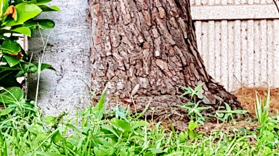 Green Color Growth Outdoors Nature Wood - Material Green Green Green!  Beautyineverything Tree_collection  Treescape WeekOnEyeEm EyeEm Gallery Colors Of Nature Texasphotographer Tree Day