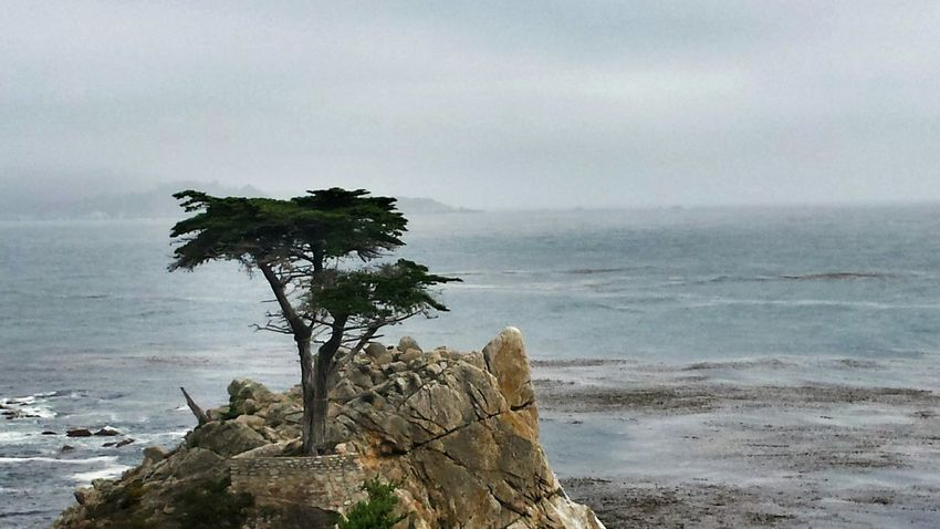 The Lone Cypress, a 250 year old Monterrey Cypress.. all by itself on a Rock in the Pacific Ocean for another Treegasmic Tuesday, hope ya'll had a good one! TreePorn EyeEm Nature Lover Nature_collection Hugging A Tree EyeEm Traveling The Great Outdoors With Adobe Ladyphotographerofthemonth Lost In The Landscape California Dreamin