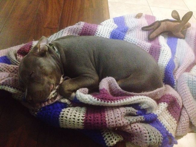 All it takes is the simple things in life sometimes to complete the comfort our lives need ❤️❤️😍 Puppy Love ❤ Pit Bull Lover & Supporter Blanket Sleepy Teady Nephew Dogs Rock