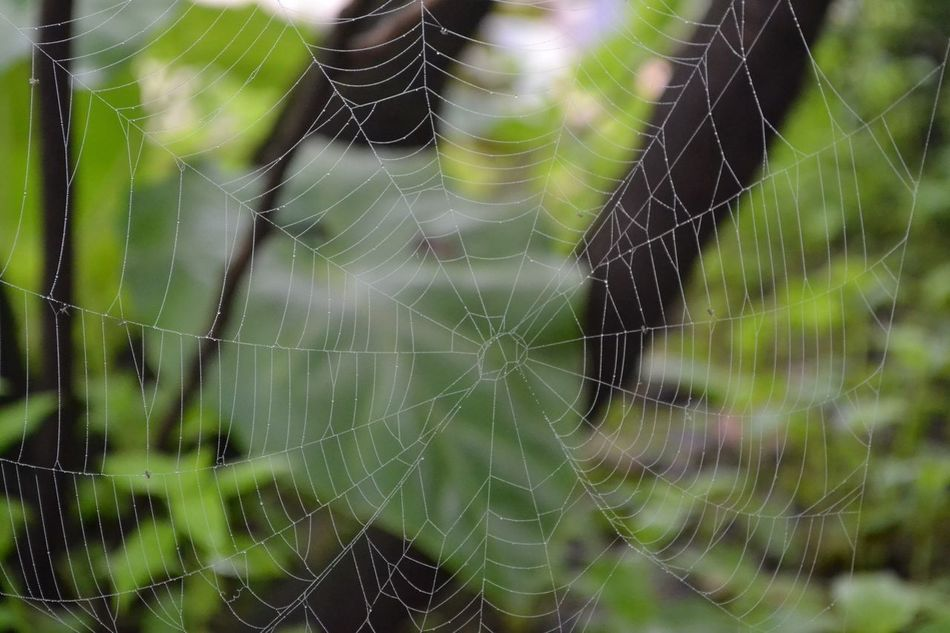 One of my best pictures, Salalah, Oman @ Prophet Job (Ayub). Awesome time!! Bestpic Salalah Sharpness Spider Spiderweb Sukothai Web Zoom