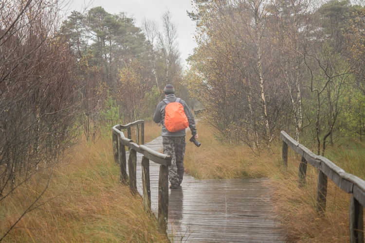 Rear view of mature man with backpack walking on boardwalk in forest