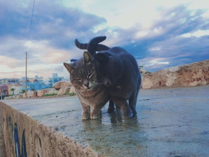 Animal Themes Sky Mammal One Animal Cloud - Sky Animals In The Wild Water Outdoors No People Nature Animal Wildlife Day Cats Cats Of EyeEm Catsoftheworld