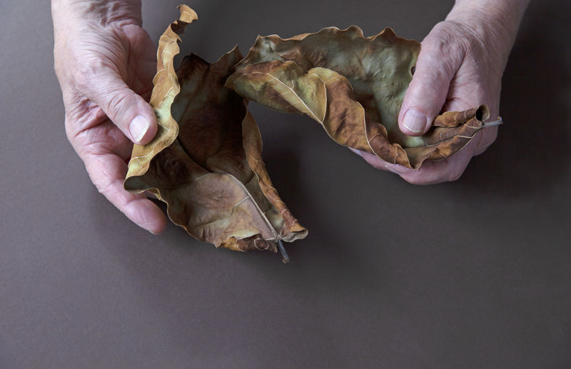 Midsection of person holding dry leaves on table