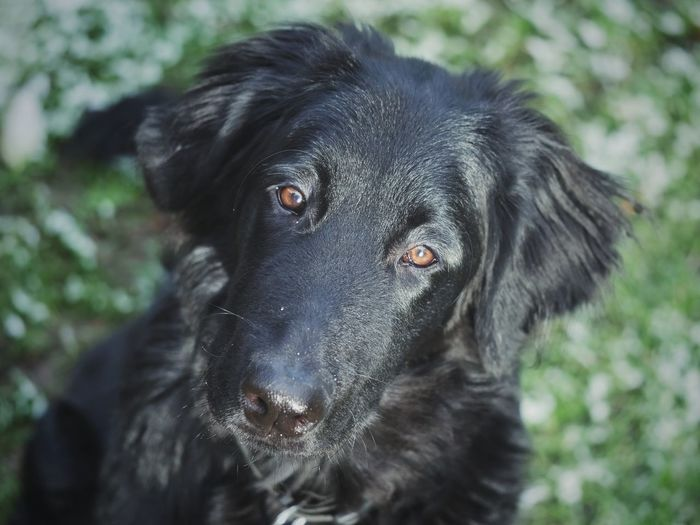 Portrait of black dog