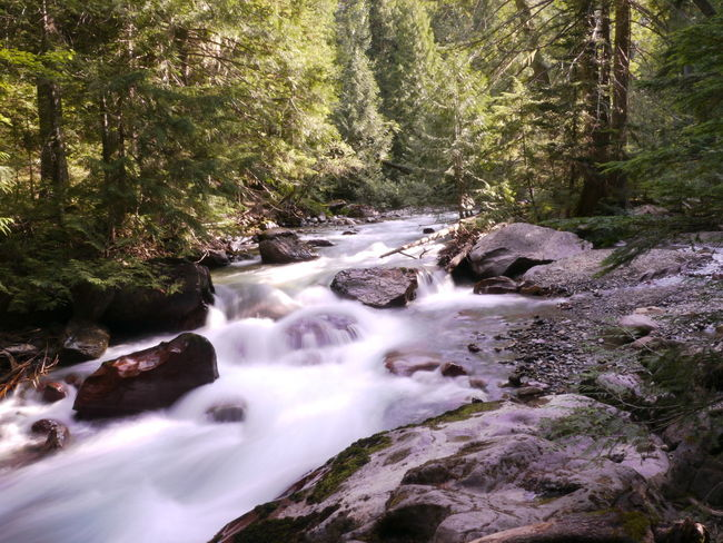 Misty stream in Glacier National Park, Montana, United States. Tree Forest Plant Long Exposure Flowing Water Scenics - Nature Beauty In Nature Water Blurred Motion Land Rock Nature Waterfall Motion Solid No People Day Rock - Object Environment Flowing Stream - Flowing Water WoodLand Outdoors Power In Nature Rainforest