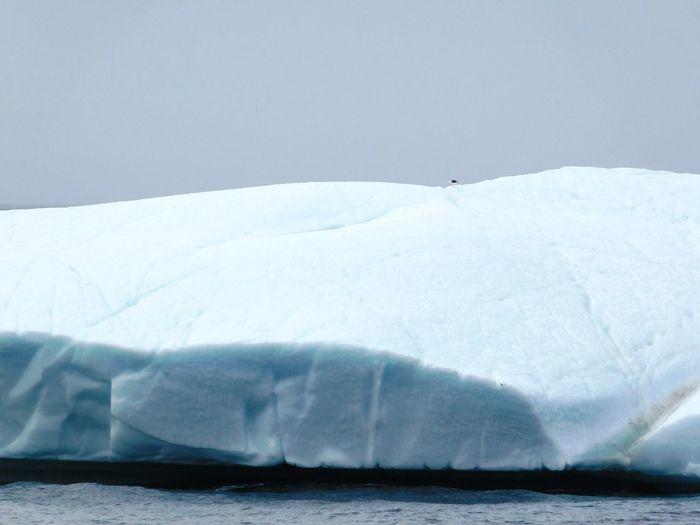 Iceberg Seabird