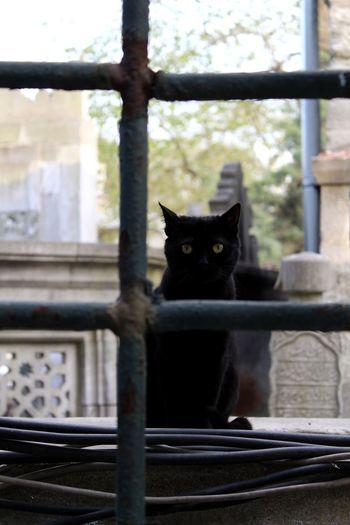Fence Steel Fence Steel Cat Black Cat Pets City Feline Domestic Cat Looking At Camera Black Color Yellow Eyes The Portraitist - 2018 EyeEm Awards The Street Photographer - 2018 EyeEm Awards EyeEmNewHere 10
